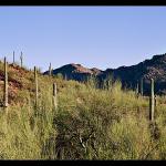 Tucson AZ Insurance